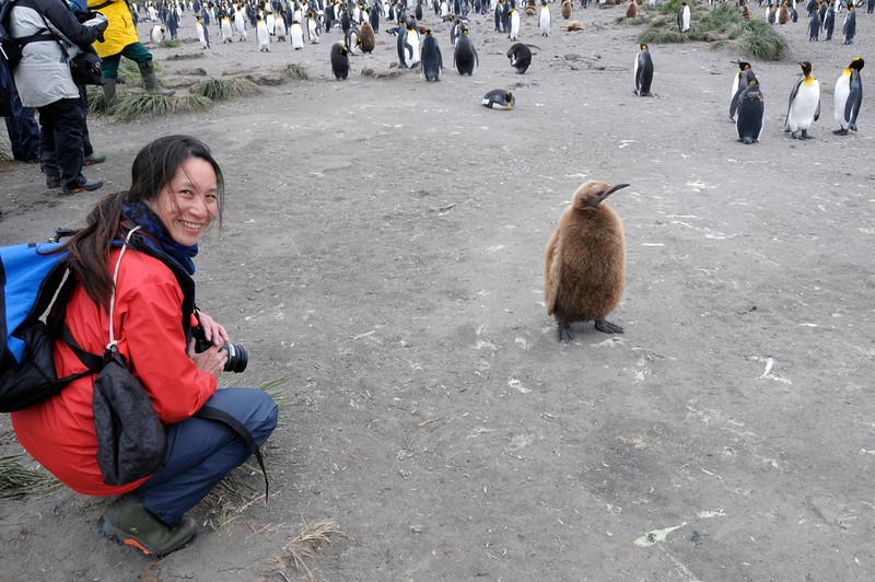 A juvenile King Penguin checks out Lilian.<br /> Salisbury Plain, South Georgia Island