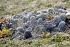 Strange flora<br /> East Falkland Island