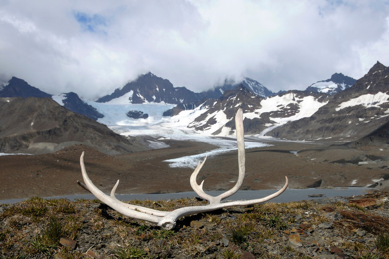 Reindeer antlers and scenery above<br /> St. Andrew's Bay, South Georgia Island.