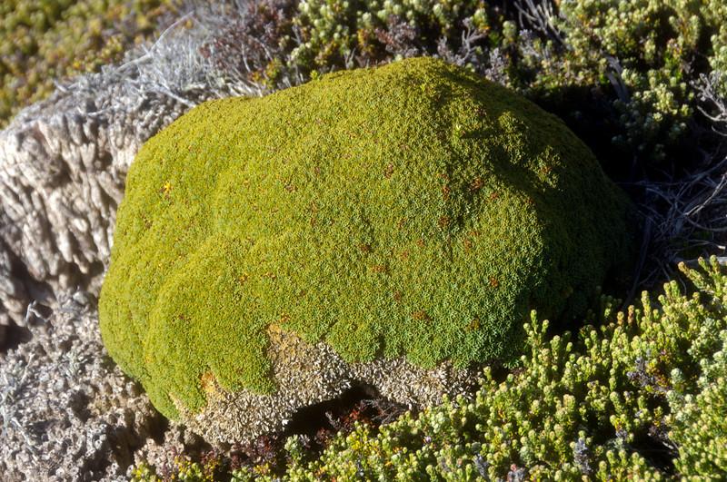 Moss<br /> East Falkland Island