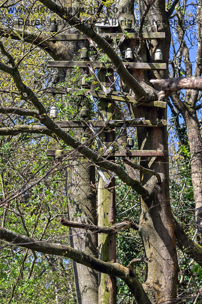 An old railway telegraph pole survives, but (now large) trees have grown through it.  Adrian Backshall retains all rights to this image.