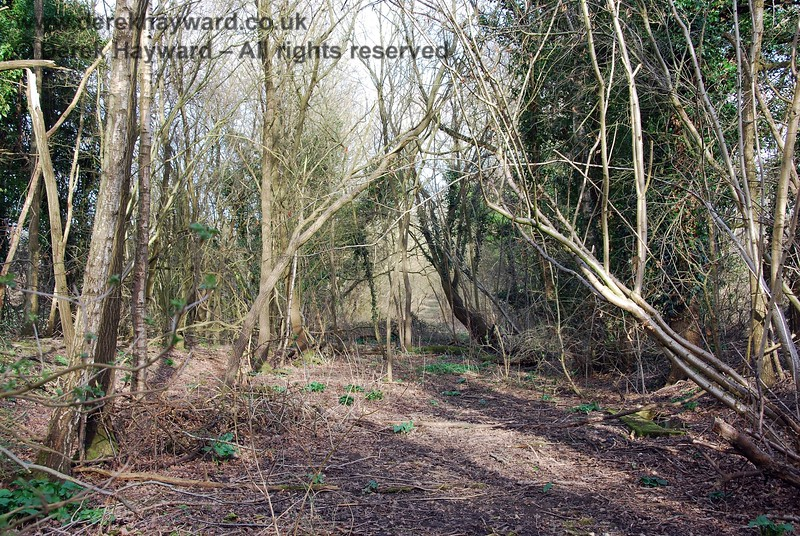 Turning round, this view looks east out of the wooded copse towards the cleared trackbed.