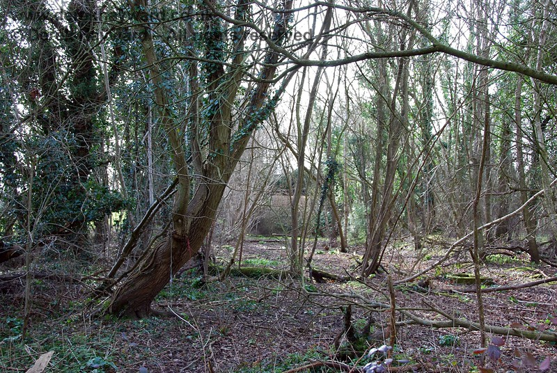 Looking into the wooded section an accommodation bridge serving Avins Farm can just be seen.