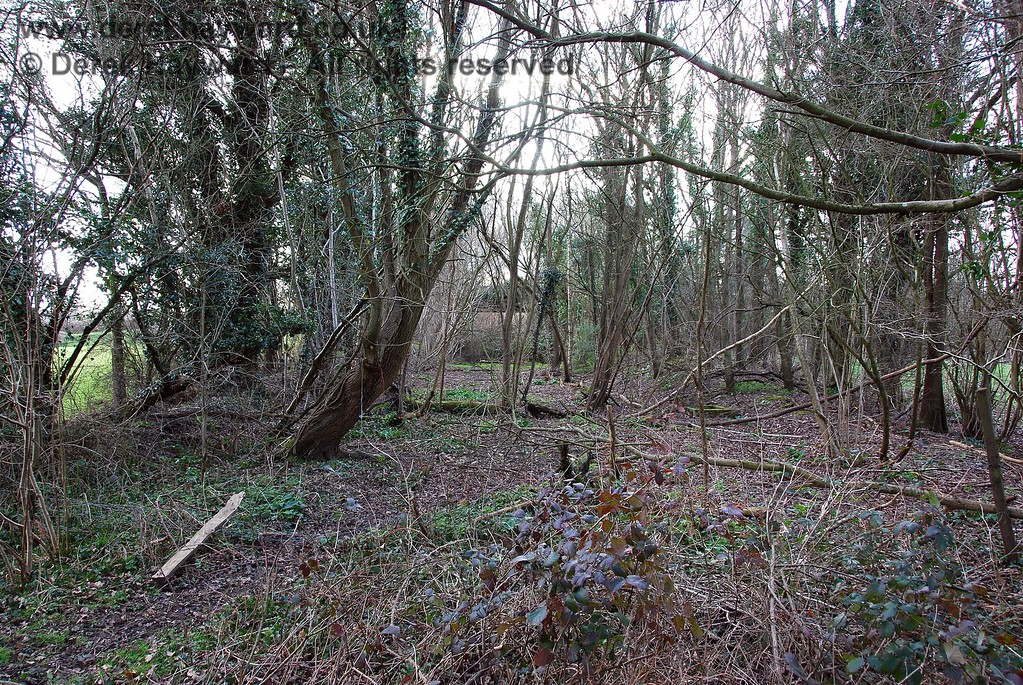 At the western end of the cleared section of trackbed is a small lightly wooded section, this view looking west