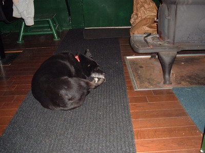 Warm as toast next to the wood stove Dec 2011.