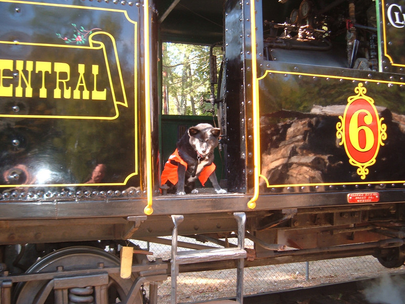 Reagan The Railroad Dog takes a ride on No.6 Railroad Days 2012