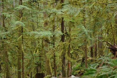 Klein Lake section SC Trail