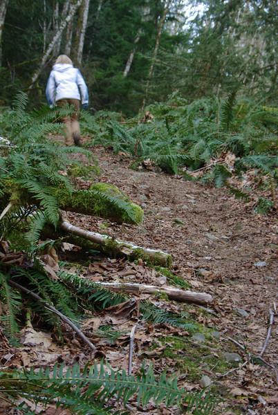 Steep access trail on north aspect of Mt Daniel.