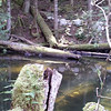 Driftwood naturally migrates to this end of the lake, then collects at the outflow point.