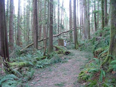 Skookumchuck Narrows Provincial Park