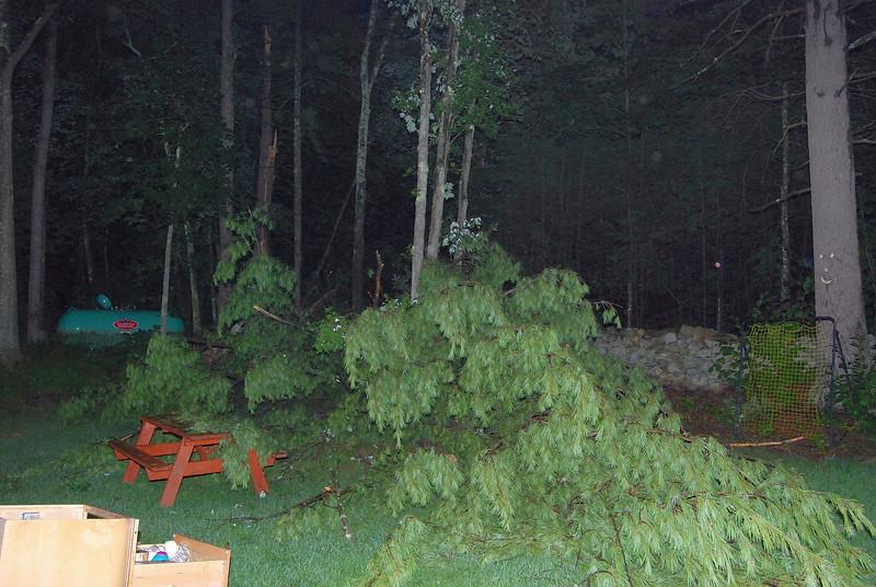 tree struck by lighting