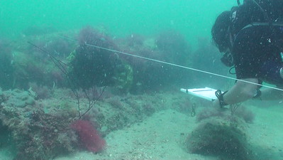 Reef Study