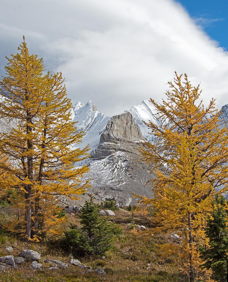 The Throne, framed by the uppermost larches in the cirque.