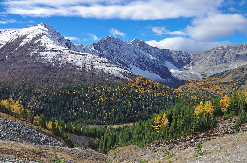 View across the valley,  to the golden forest in Pocaterra cirque.
