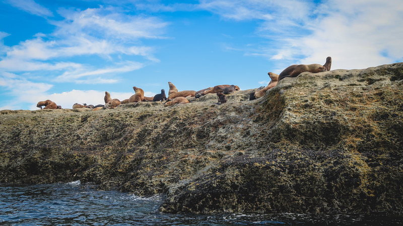 Boat tour to Punta Piramide to see sea lions