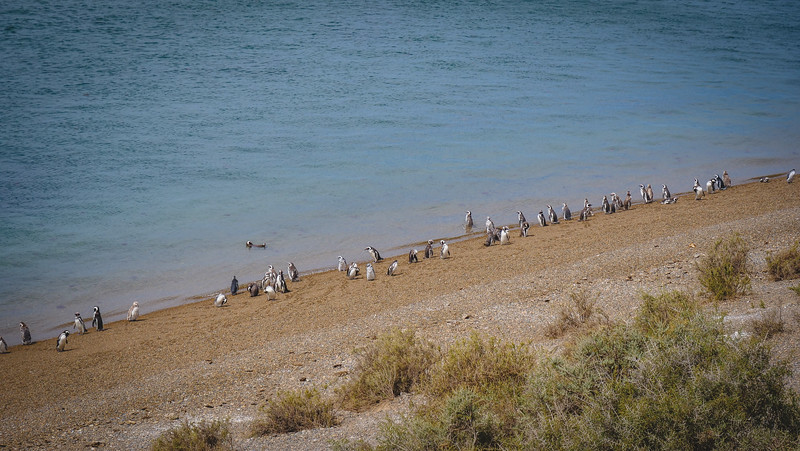 Penguins on the eastern shores of Peninsula Valdes