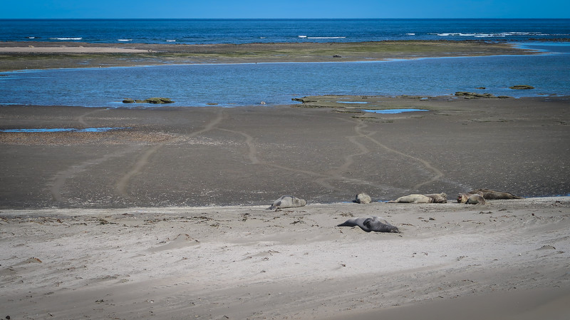 Elephant seals at Punta Delgada on Peninsula Valdes