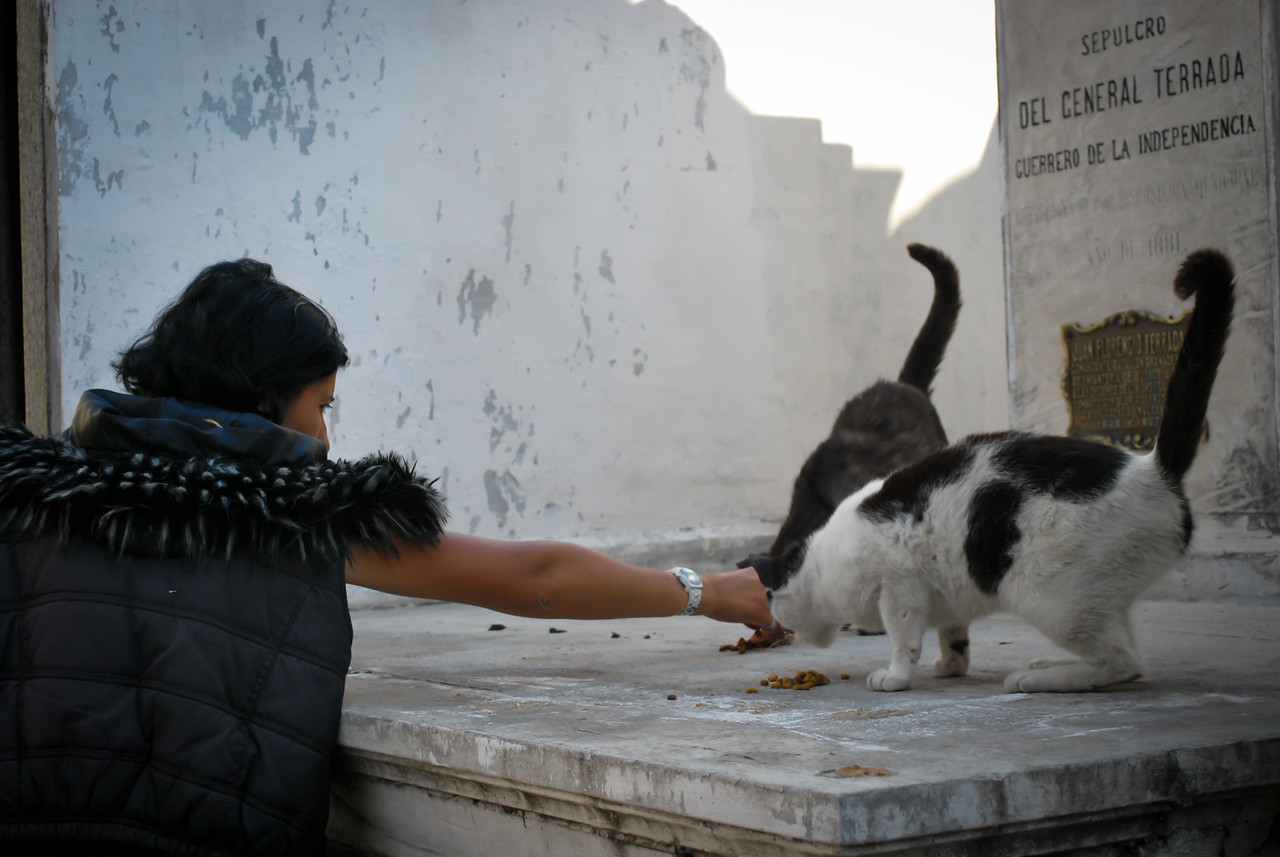 Weird lady feeding the cats that live at Recoleta Cemetery
