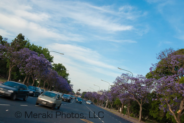 Photo of jacarandas lining the street
