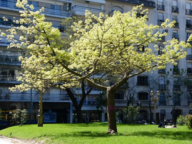 Praça Vicente Lopez