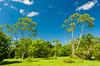 Tropical vegetation in the forest near the Iguazu Falls, Argentina, South America.