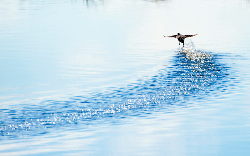 Flying on water