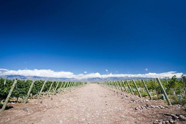 Bodega Salentein - Mendoza