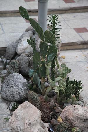 Kaktusy w ogródku