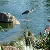 Riparian Preserve, Gilbert, AZ