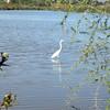 Riparian Water Preserve, Gilbert, AZ