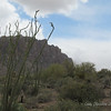 Ocotillo and the Superstition Mountains