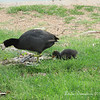 A Mama bird and her baby, looking for food.  <br /> Every time I took a step, Mama bird kept herself between me and her baby :) <br /> at Red Mountain Park