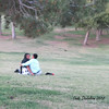 Love is.... alive!  <br /> Freestone Park, Gilbert AZ