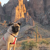 Took my Sadie up Superstition Mountain to watch the sunset!