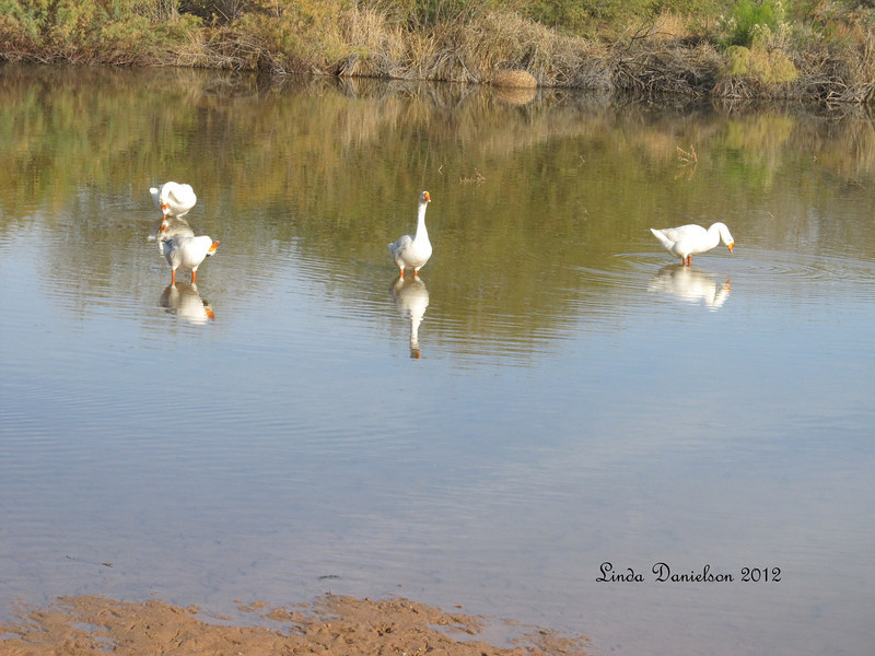 Ducks @Riparian