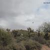 A hawk soars on the breezes