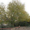 """Tree @Riparian<br /> There are benches - """"stops"""" - along the paths in order to take a moment and watch the birds on the ponds"""