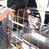 Tanya feeding the horses