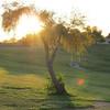 Tree ('nuff said.)