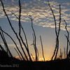 Sunrise beyond the ocotillo