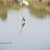 Bird @Riparian