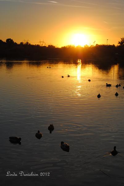 Sunset at Riparian Preserve, Gilbert AZ