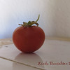 Tomato - home grown!<br /> 12/6 - side note:  I ate this tomato today.  Tasted NOTHING like what I get in the stores. hehehe Home Grown is awesome :)
