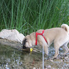 Sadie loves to investigate water!