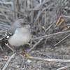 Petite Bird