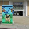 Painted Pug!