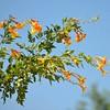 Hummingbird Desert Favorite