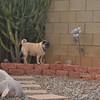 Queen of the Backyard !