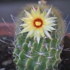 Late Summer Bloom