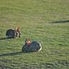 Hungry Bunnies